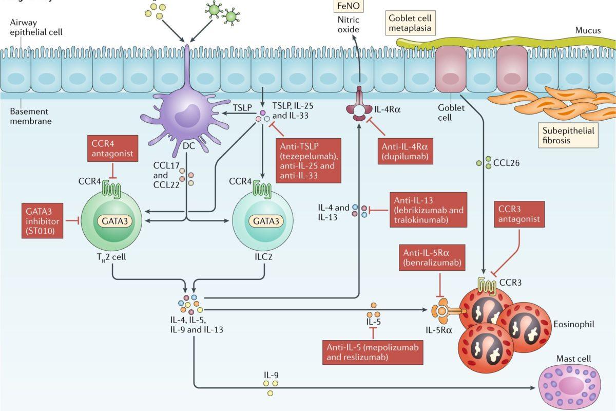 Таргетная (биологическая) терапия бронхиальной астмы в педиатрии.