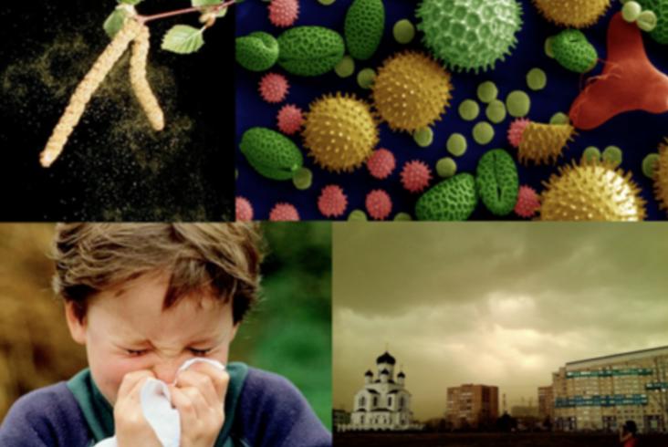 """Лекция """"Аллергия на пыльцу деревьев и трав. Что происходит с организмом и почему? Что такое иммунотерапия?"""